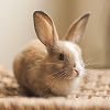 Rabbits & Bunnies