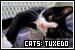 Cats: Tuxedo (Bicolor / Black and White)