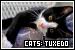 Cats: Tuxedo (Bicolor / Black and White)