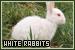 Rabbits: White