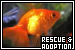 Animal Rescue and Adoption Groups