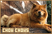 Dogs: Chow Chows