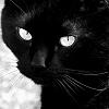 Cats: Black