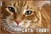 Cats: Tabby